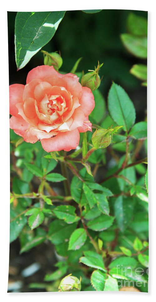 No People Hand Towel featuring the photograph Pink Rose In The Garden by Igor Grey