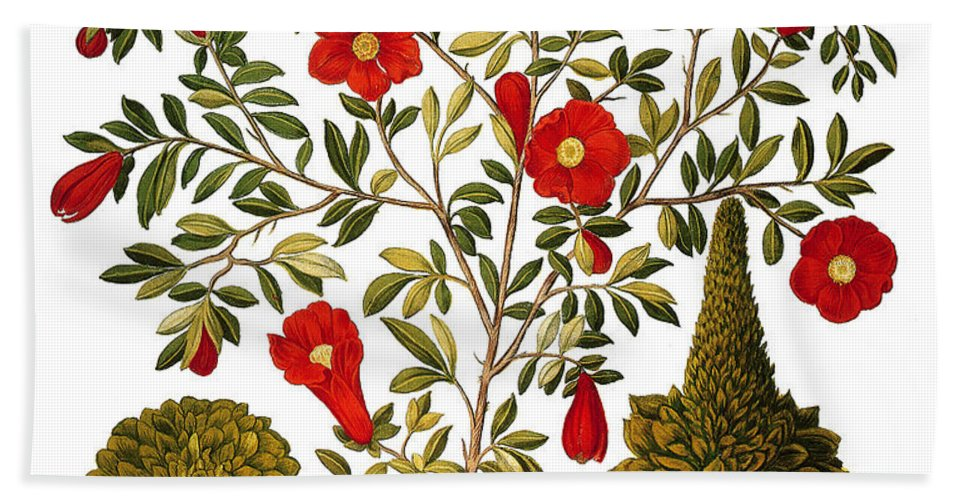 1613 Hand Towel featuring the photograph Pomegranate, 1613 by Granger