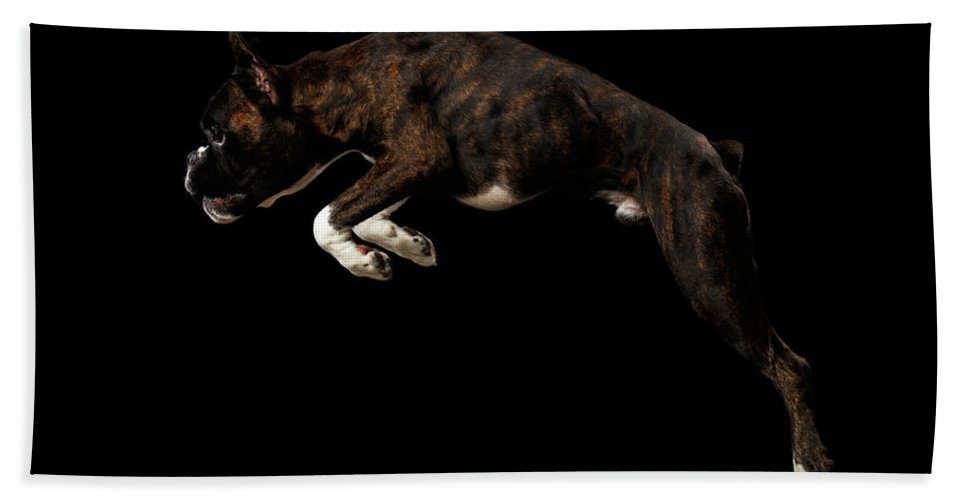 Boxer Hand Towel featuring the photograph Purebred Boxer Dog Isolated on Black Background by Sergey Taran