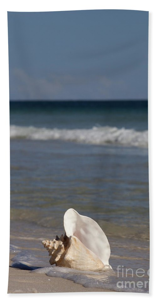 Queen Conch Bath Sheet featuring the photograph Queen Conch On The Beach by Anthony Totah