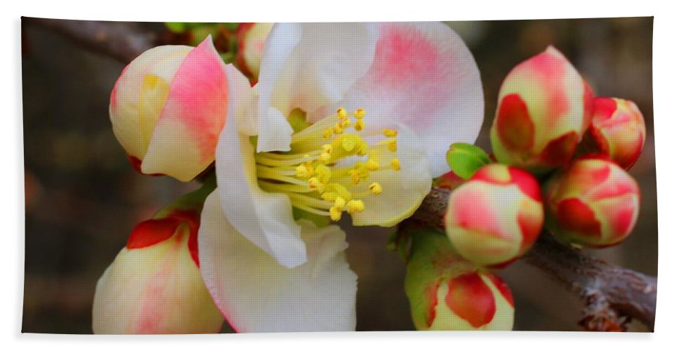 Quince Bath Towel featuring the photograph Quince Toyo Nishiki by Kathryn Meyer