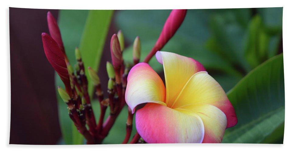 Hao Aiken Bath Sheet featuring the photograph Rainbow Plumeria by Hao Aiken