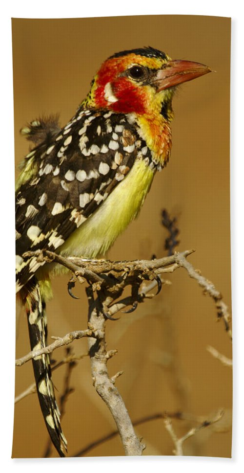 Africa Hand Towel featuring the photograph Red And Yellow Barbet by Michele Burgess