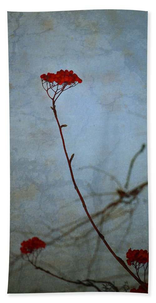 Blue Hand Towel featuring the photograph Red Berries Blue Sky by Tara Turner