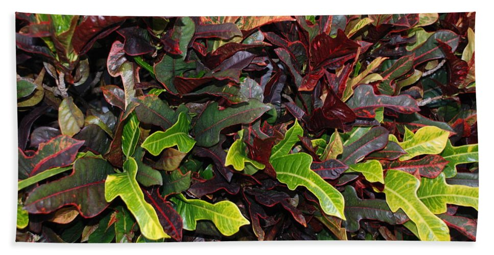 Macro Hand Towel featuring the photograph Red Green Leaves by Rob Hans