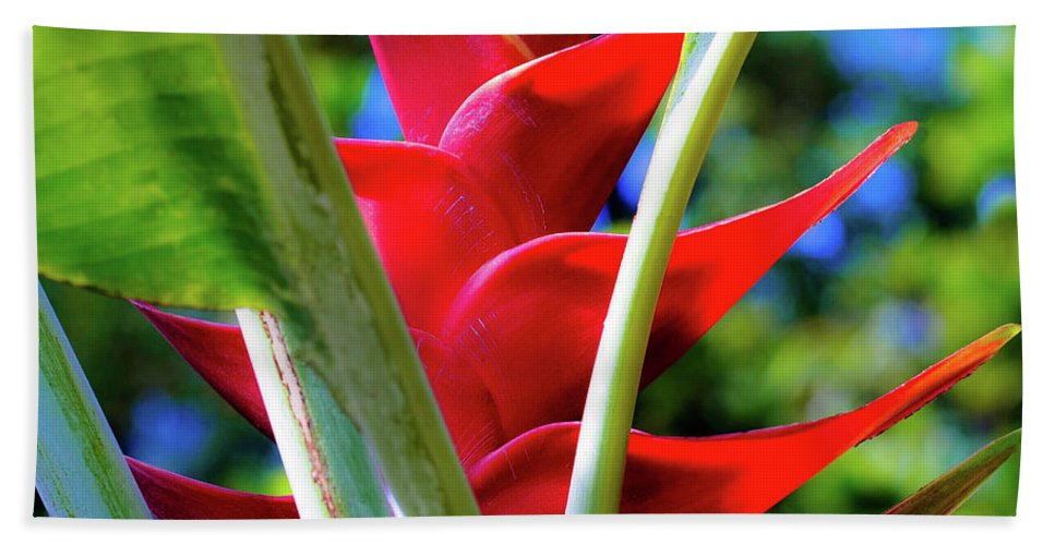 Red Bath Towel featuring the photograph Red Heliconia Hawaii by D Davila