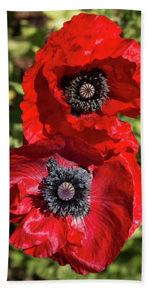 Flowers Hand Towel featuring the photograph Red Poppies by Bruce Frye