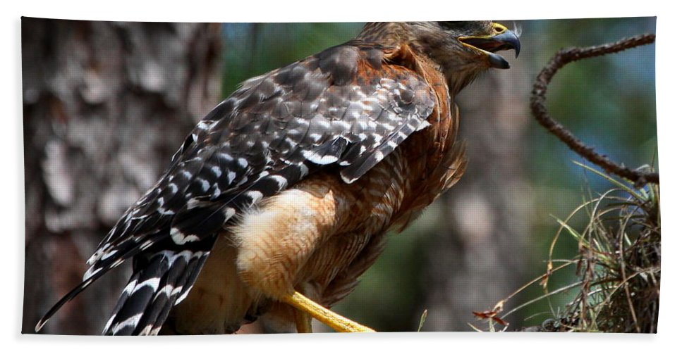 Red Shouldered Hawk Hand Towel featuring the photograph Red Shouldered Hawk by Barbara Bowen