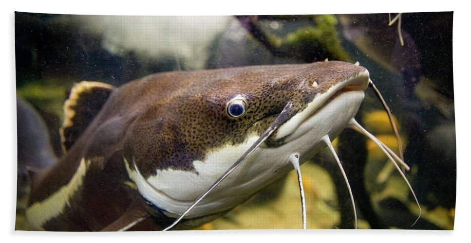 Catfish Hand Towel featuring the photograph Redtail Catfish by Art Phaneuf