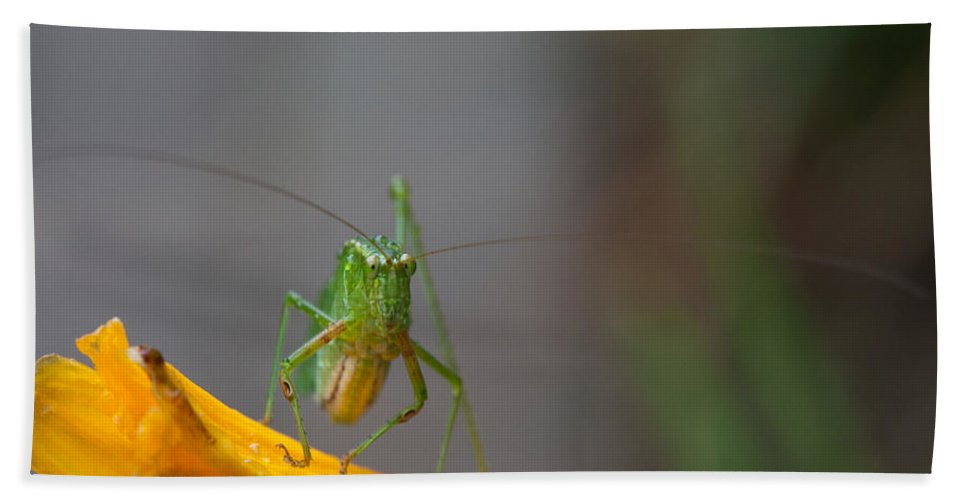 Grasshopper Bath Sheet featuring the photograph Right At You by Karol Livote