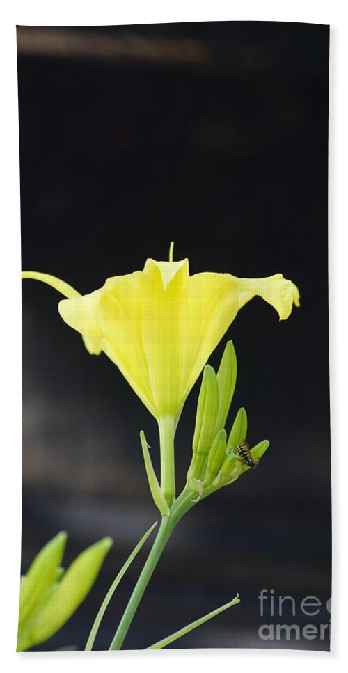 Flowers Bath Sheet featuring the photograph Road Side Beauty by Jeffery L Bowers