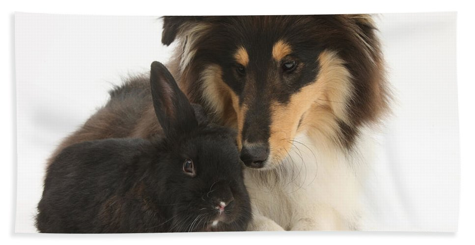 Fauna Hand Towel featuring the photograph Rough Collie With Black Rabbit by Mark Taylor