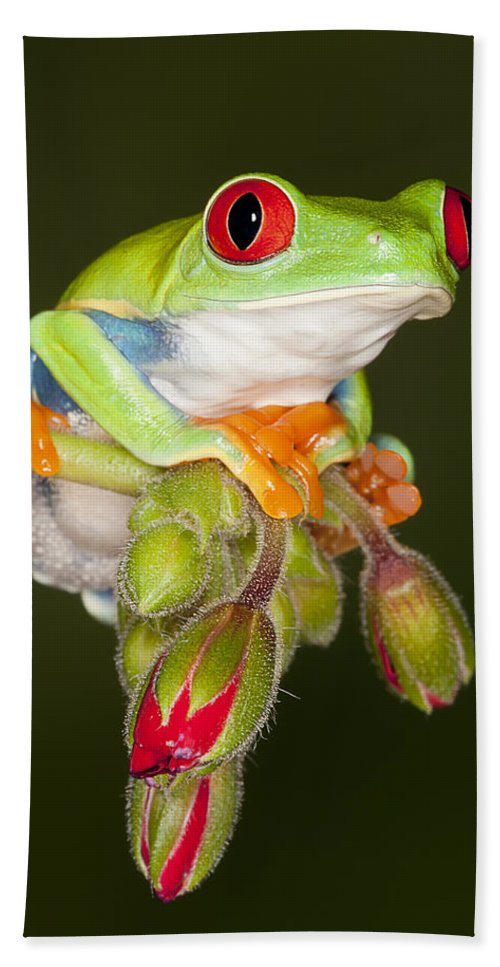 Frog Hand Towel featuring the photograph Ruby Red by Janet Fikar