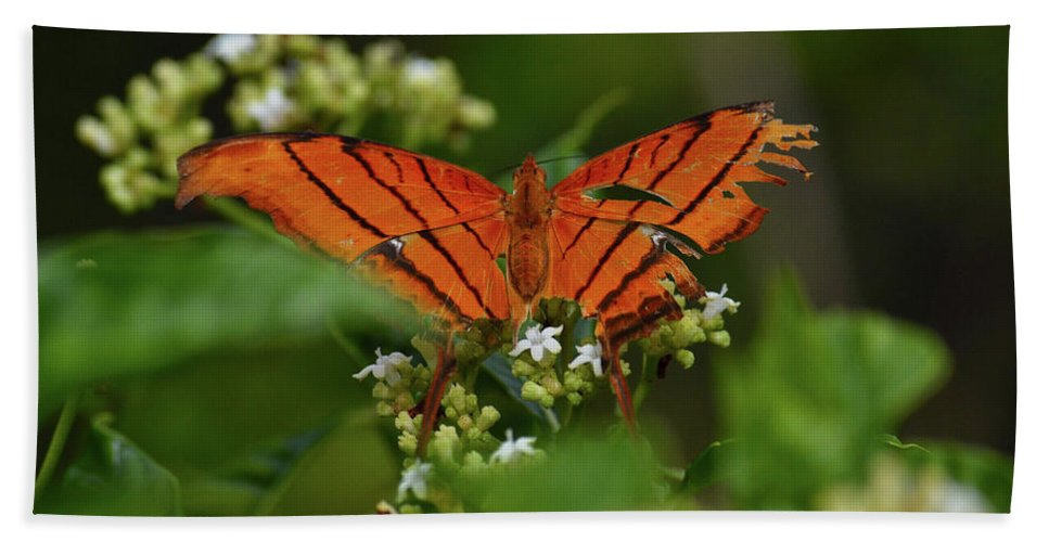 Butterfly Hand Towel featuring the photograph Ruddy Daggerwing Butterfly by Krista Russell