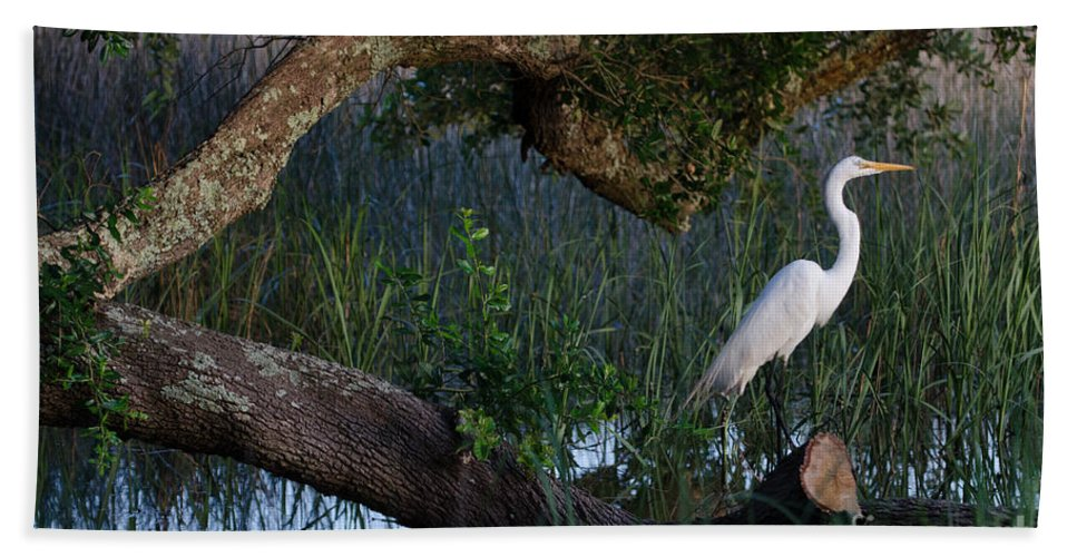 White Heron Bath Sheet featuring the photograph Salt Marsh Heron by Dale Powell