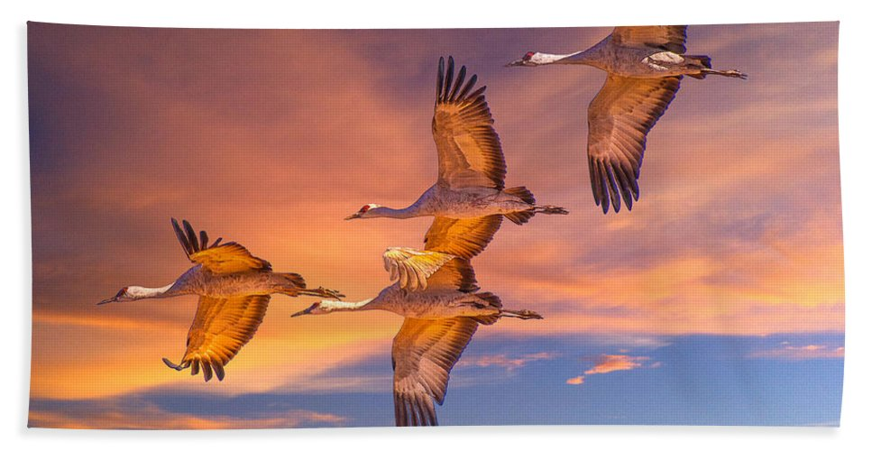 Birds Bath Sheet featuring the photograph Sandhill Cranes by Larry White