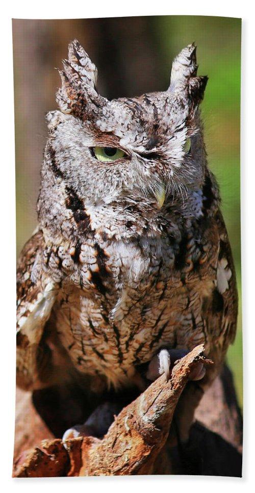 Screech Owl Hand Towel featuring the photograph Screech Owl by SC Shank