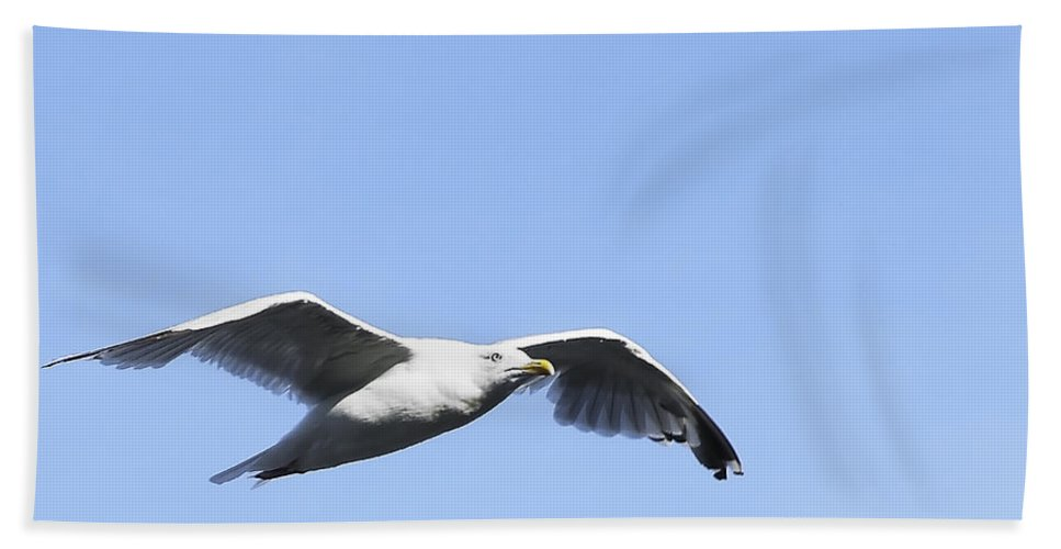 Bird Hand Towel featuring the photograph Seagull by Svetlana Sewell