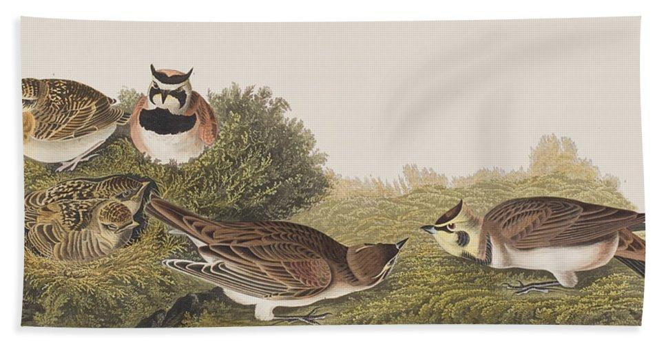 Shore Lark Bath Sheet featuring the painting Shore Lark by John James Audubon