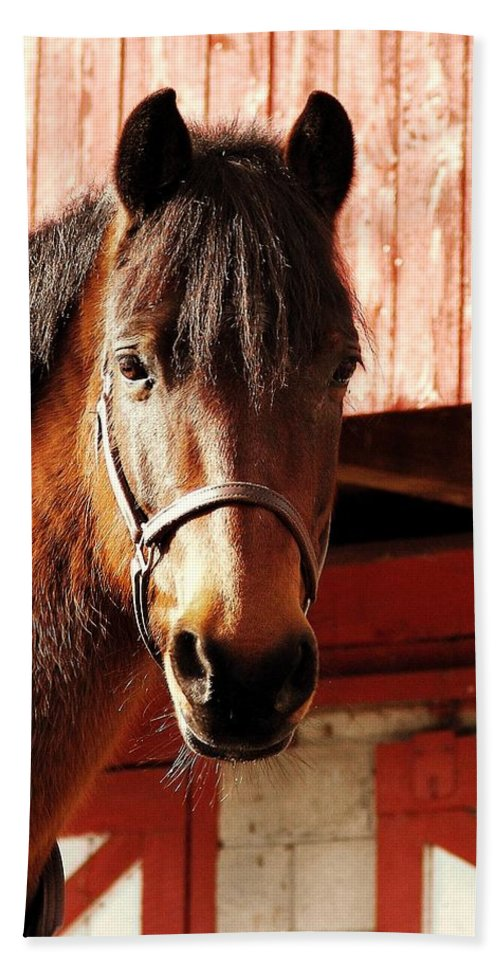 Horse Bath Sheet featuring the photograph Show And Tell by JAMART Photography