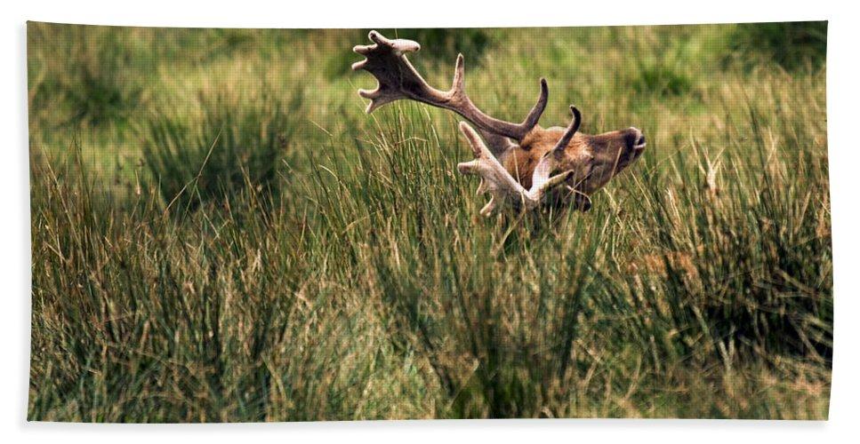 Fallow Deer Hand Towel featuring the photograph Siesta by Angel Ciesniarska