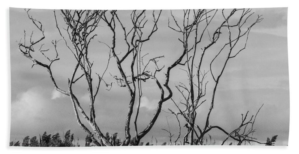 Natanson Bath Sheet featuring the photograph Silhouette by Steven Natanson