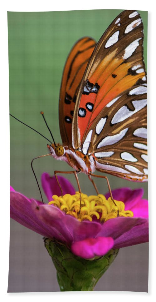 Orange Butterfly Bath Sheet featuring the photograph Sitting Pretty by My Angle On It Photography
