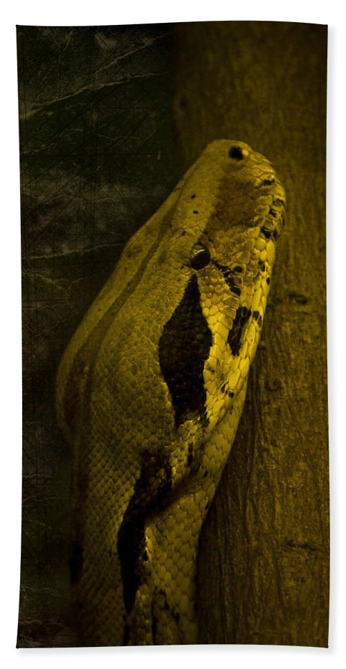 Black Snake Hand Towel featuring the photograph Snake by Svetlana Sewell