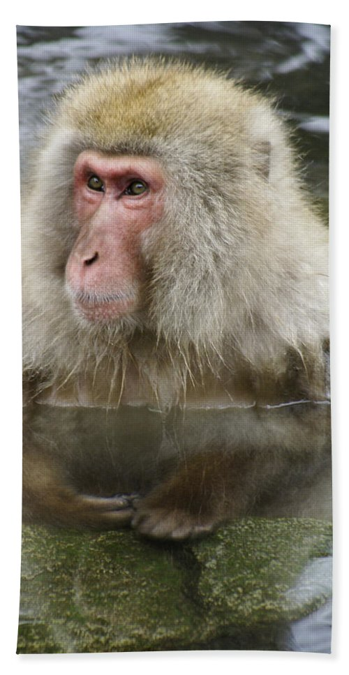 Snow Monkey Hand Towel featuring the photograph Snow Monkey Bath by Michele Burgess