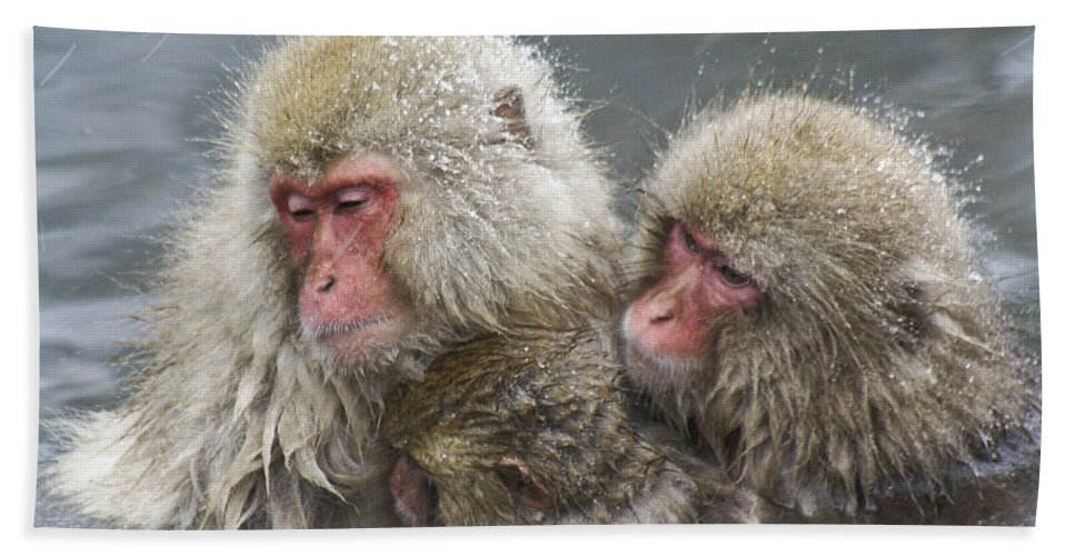 Snow Monkey Hand Towel featuring the photograph Snuggling Snow Monkeys by Michele Burgess