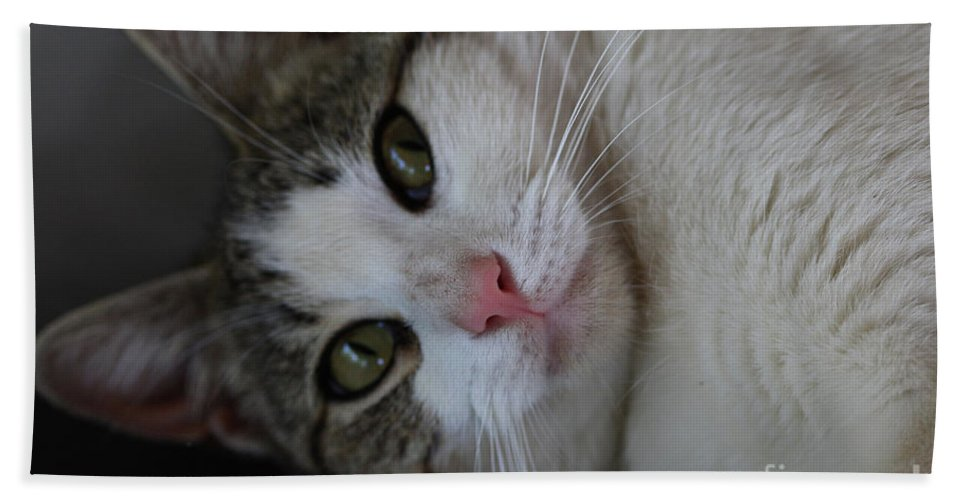 Cats Bath Sheet featuring the photograph Soxx by Kim Henderson