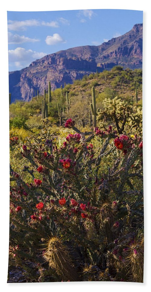 Cholla Cactus Bath Towel featuring the photograph Spring In The Desert by Saija Lehtonen