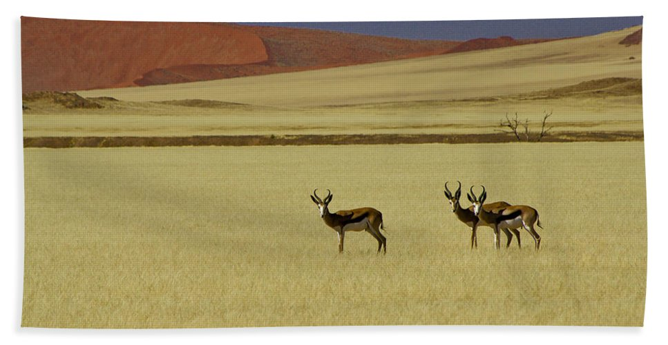 Africa Hand Towel featuring the photograph Springbok At Sossusvlei by Michele Burgess