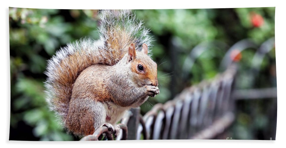 Squirrel Bath Sheet featuring the photograph Squirrel by Paul Fell