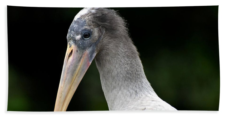 Wood Stork Bath Sheet featuring the photograph Strike A Pose by Jim Lapp