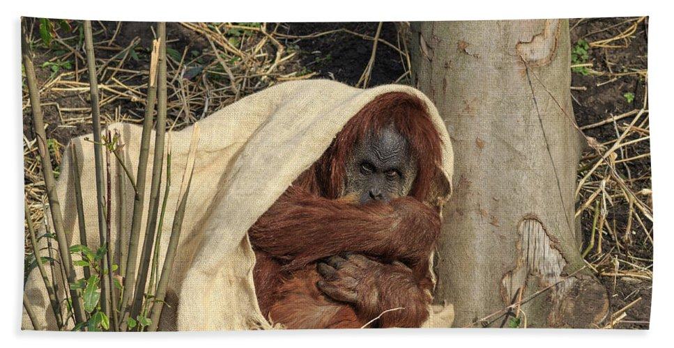 Orangutan Bath Sheet featuring the photograph Sumatran Orangutang - by Chris Smith