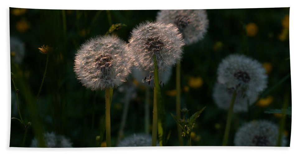 Miguel Bath Sheet featuring the photograph Summer Breeze by Miguel Winterpacht