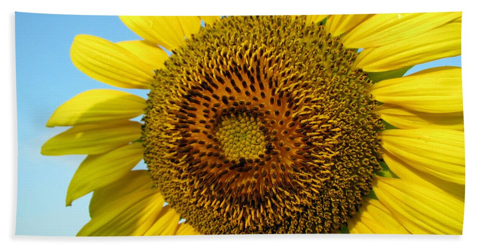 Sunflower Bath Sheet featuring the photograph Sunflower Series by Amanda Barcon