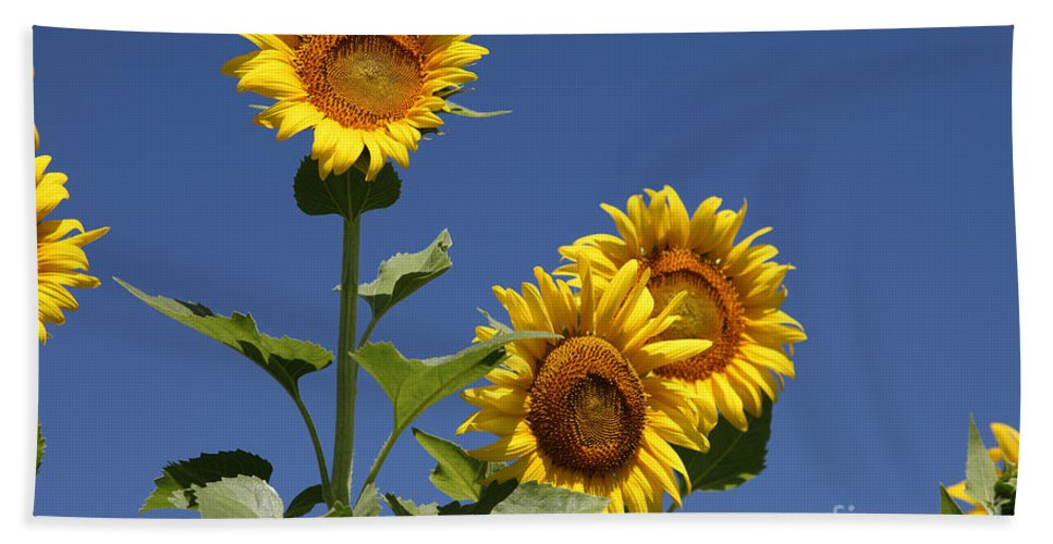 Sunflowers Hand Towel featuring the photograph Sunflowers by Amanda Barcon