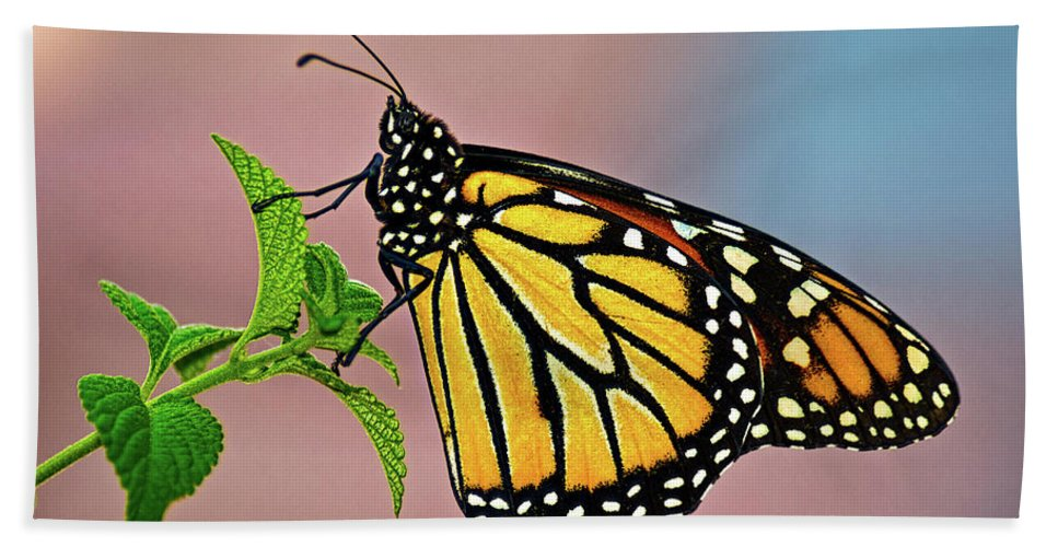 Insect Hand Towel featuring the photograph Taking A Break by Christopher Holmes