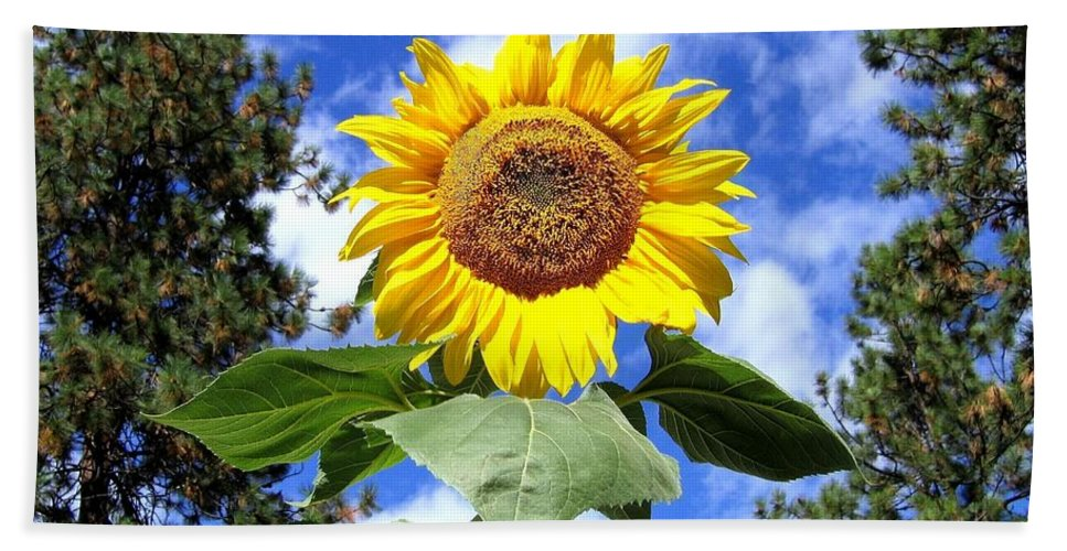 Sunflower Bath Towel featuring the photograph Tall And Sunny by Will Borden