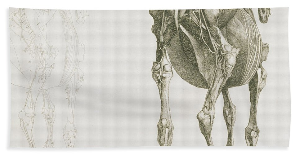 The Anatomy Of The Horse Hand Towel for Sale by George Stubbs