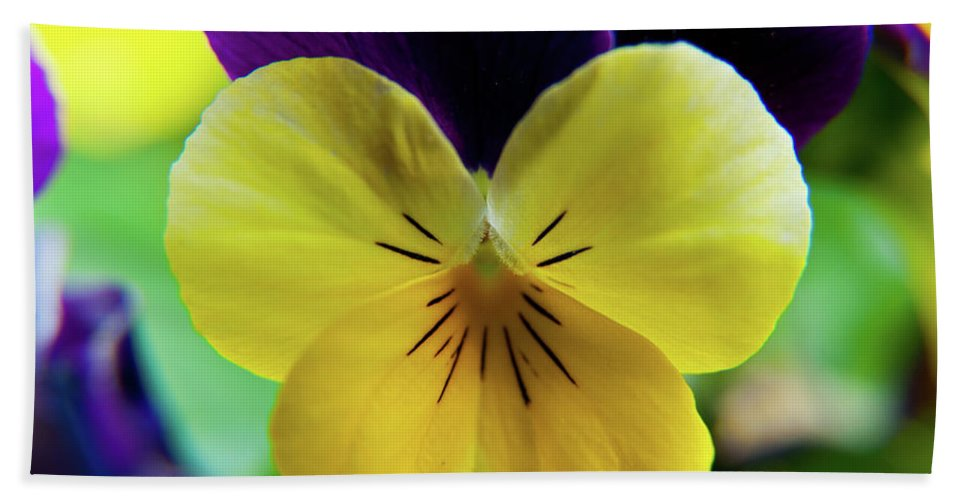 Flowers Bath Sheet featuring the photograph The Face Of A Pansy by Brenda Jacobs
