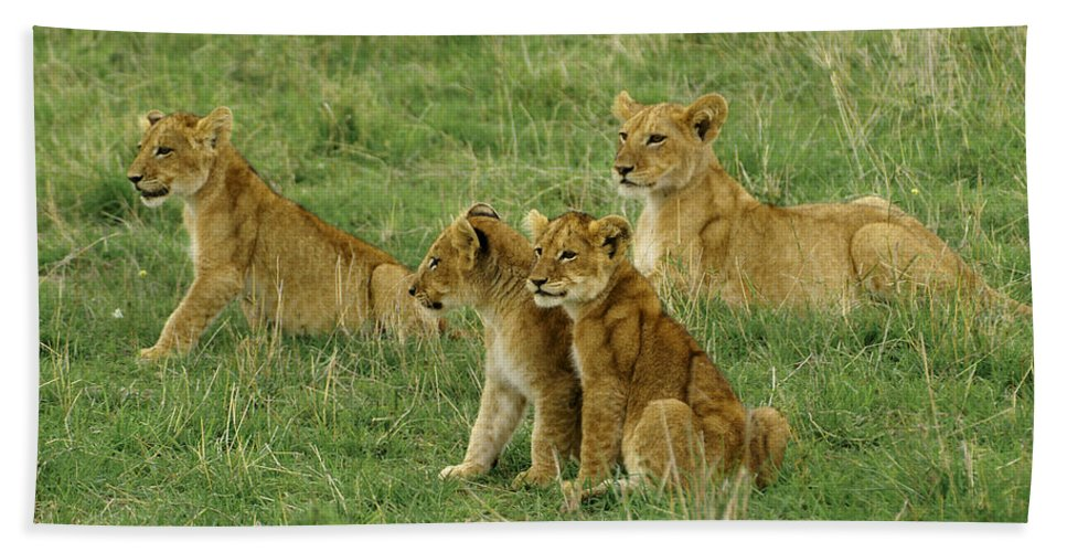 Lion Hand Towel featuring the photograph The Four Musketeers by Michele Burgess