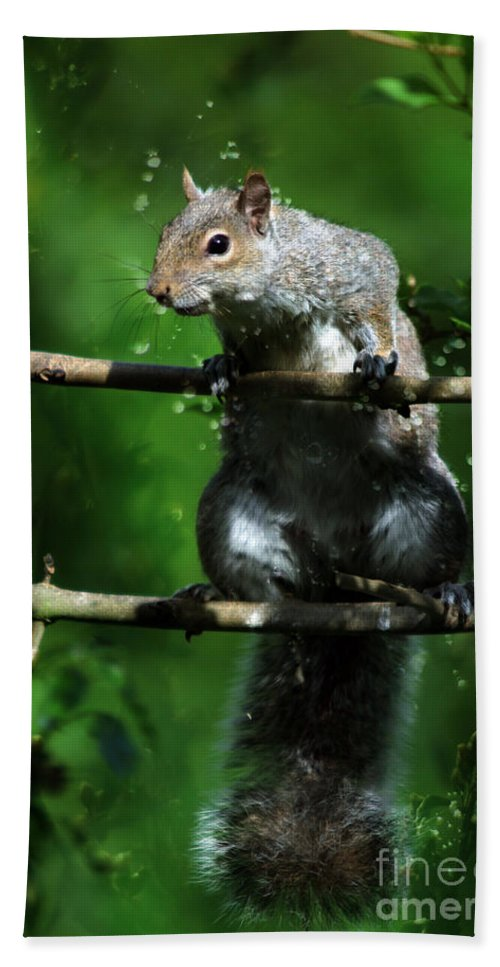 Squirrel Bath Sheet featuring the photograph The Squirrel From Fairyland by Angel Ciesniarska