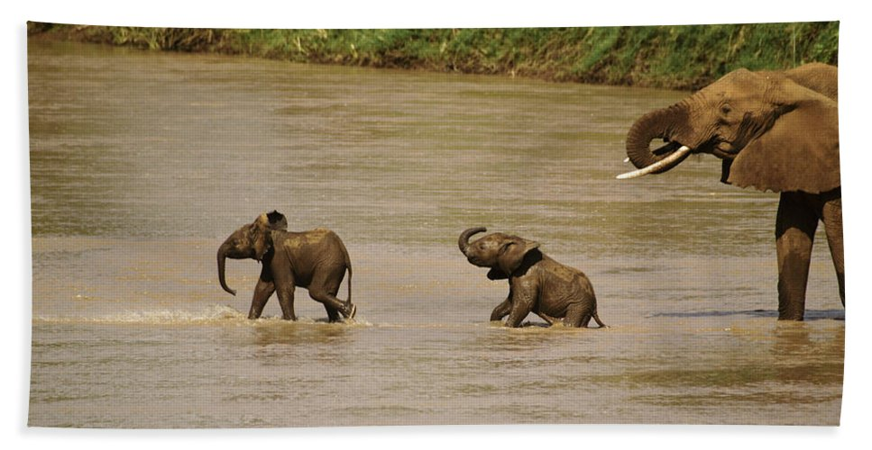 Africa Hand Towel featuring the photograph Tiny Elephants by Michele Burgess