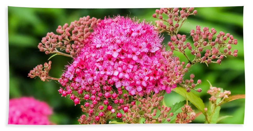 Tiny Pink Spirea Flowers Hand Towel featuring the photograph Tiny Pink Spirea Flowers by Cynthia Woods