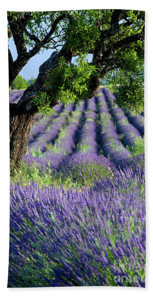 Agricultural Bath Sheet featuring the photograph Tree In Lavender by Brian Jannsen
