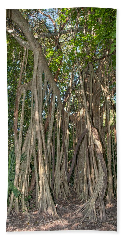 Mexico Quintana Roo Bath Sheet featuring the digital art Trees With Aerial Roots At The Coba Ruins by Carol Ailles