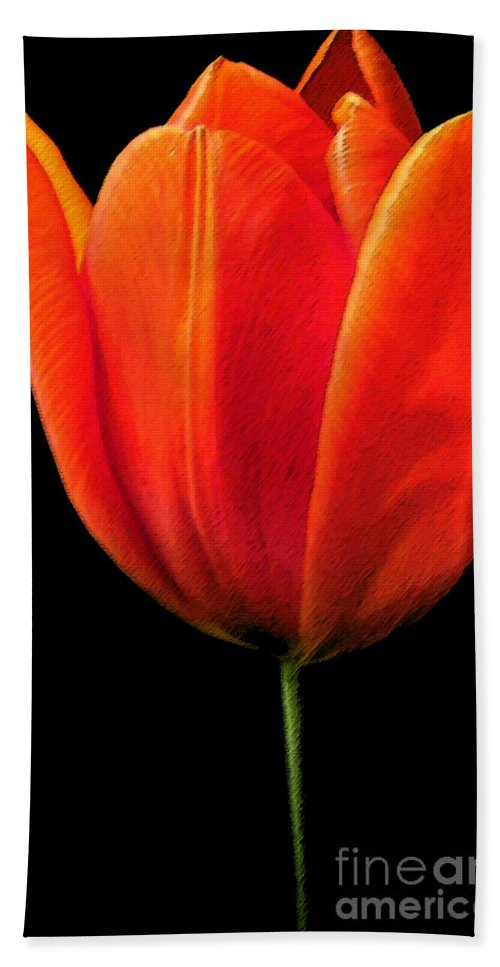 Tulips Hand Towel featuring the photograph Tulip by Amanda Barcon
